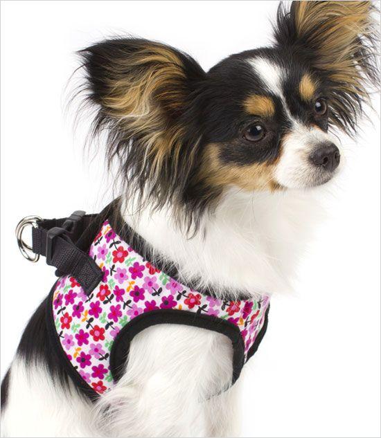 Ultra USA Spring Choke-Free Dog Harness (มีรูปภาพ