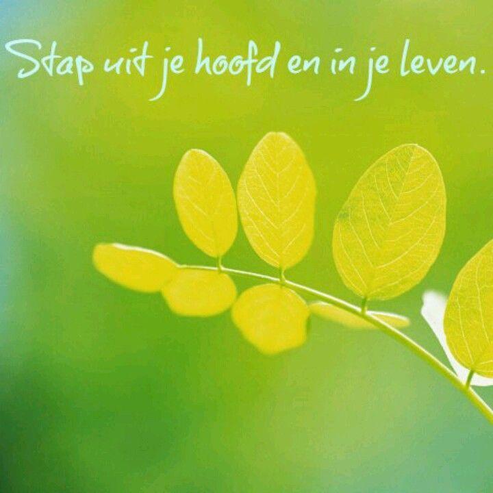 Citaten Volg Je Hart : Stap uit je hoofd en in leven gedichten