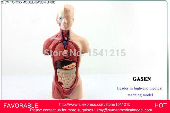 Organs Torso Anatomy Model Medical Dummy Medical Mannequin Human