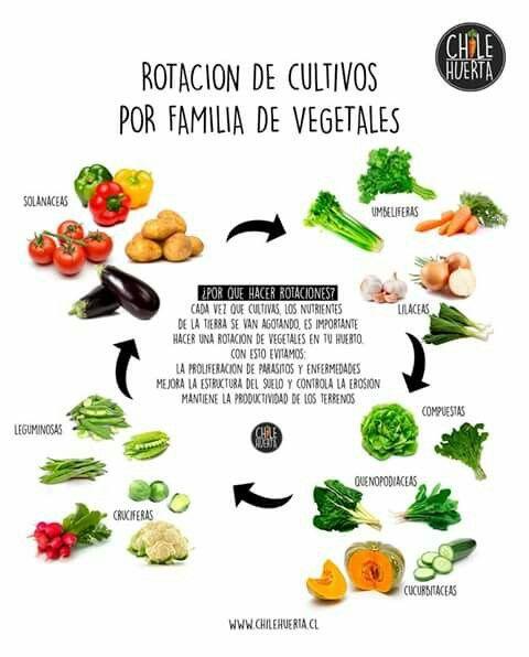 Rotaci n de cultivos huerto casero rotaci n de for Rotacion cultivos agricultura ecologica