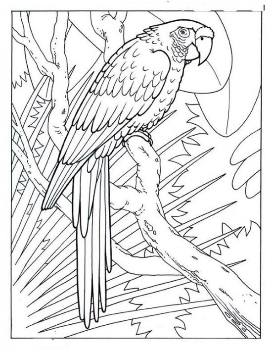 Cool Coloring Pages Picture 1