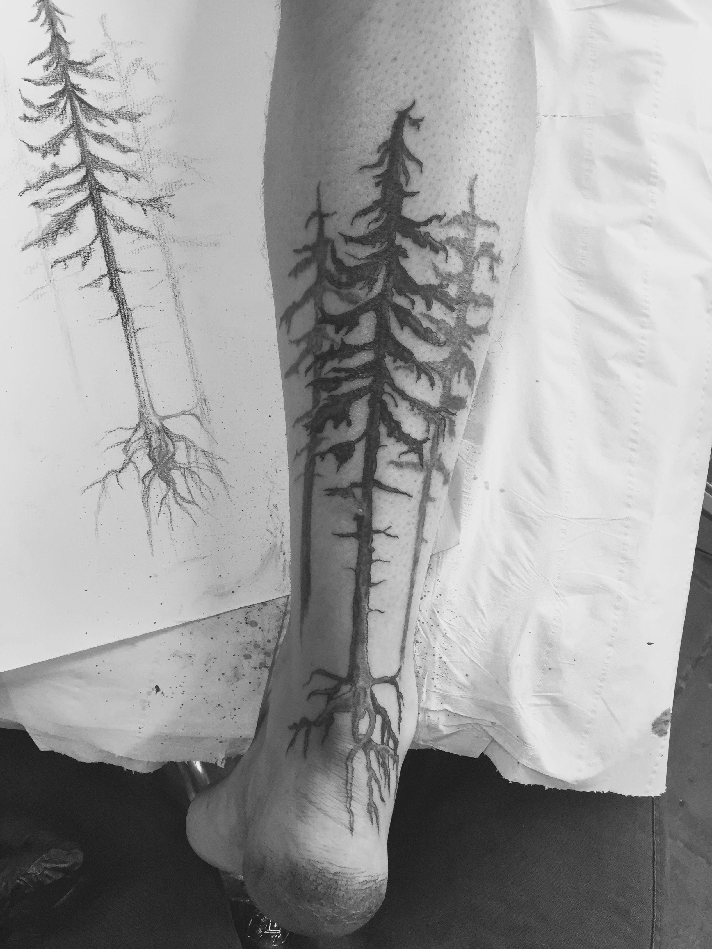 Pine Tree Forest Tattoo Tree Roots Tattoo Pine Tree Tattoo Tree Tattoo