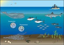 aquatic ecosystems google search 7th grade science pinterest aquatic ecosystem and school. Black Bedroom Furniture Sets. Home Design Ideas