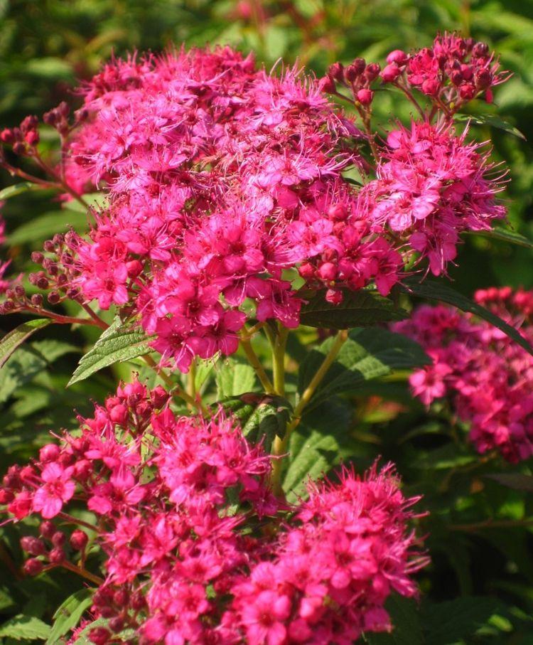 Pergola Im Garten Ruckzugsort Bluhend ? Bitmoon.info Wie Man Einen Gesunden Gemuse Garten Plant Und Aufrechterhalt