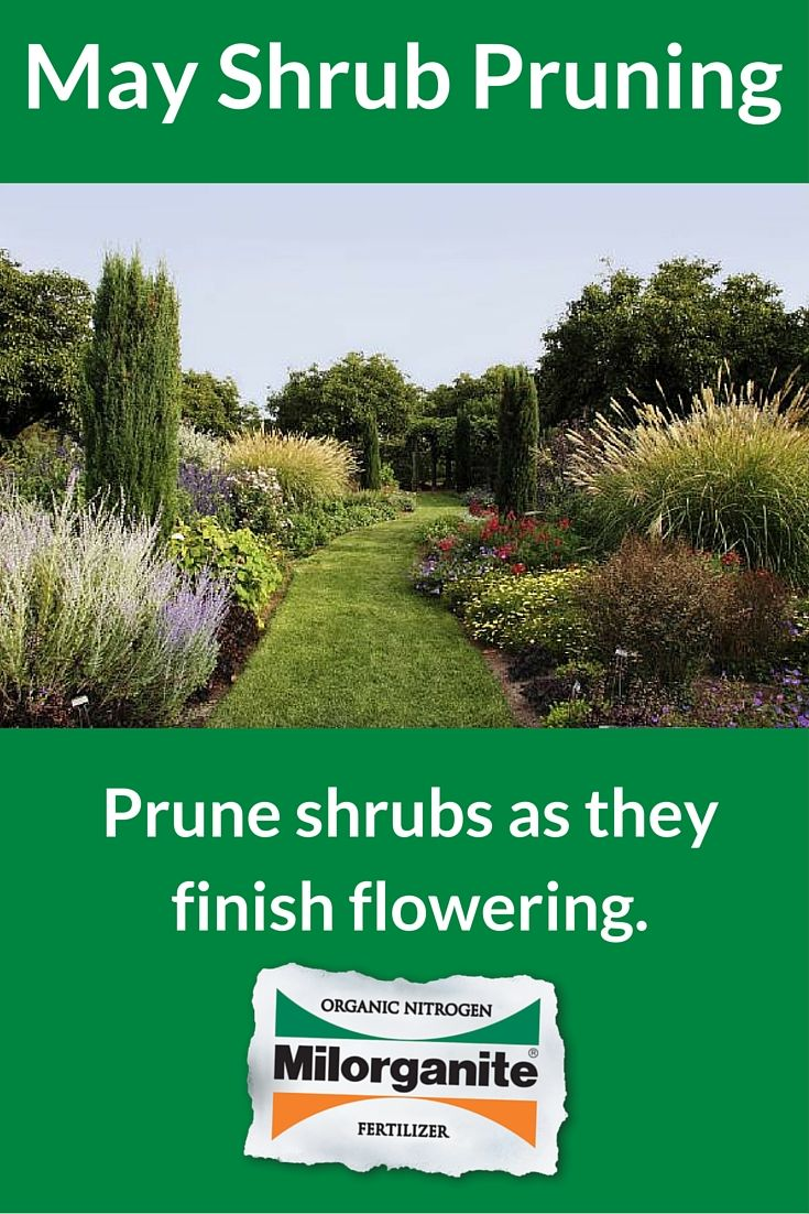 Prune Spring Flowering Shrubs As Soon As They Are Done Blooming