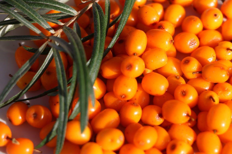 Seabuck thorn Berry Recipes