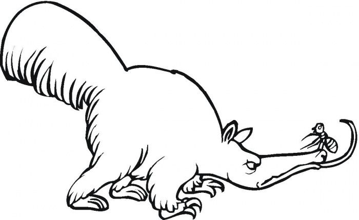 Anteater 7 Coloring Page