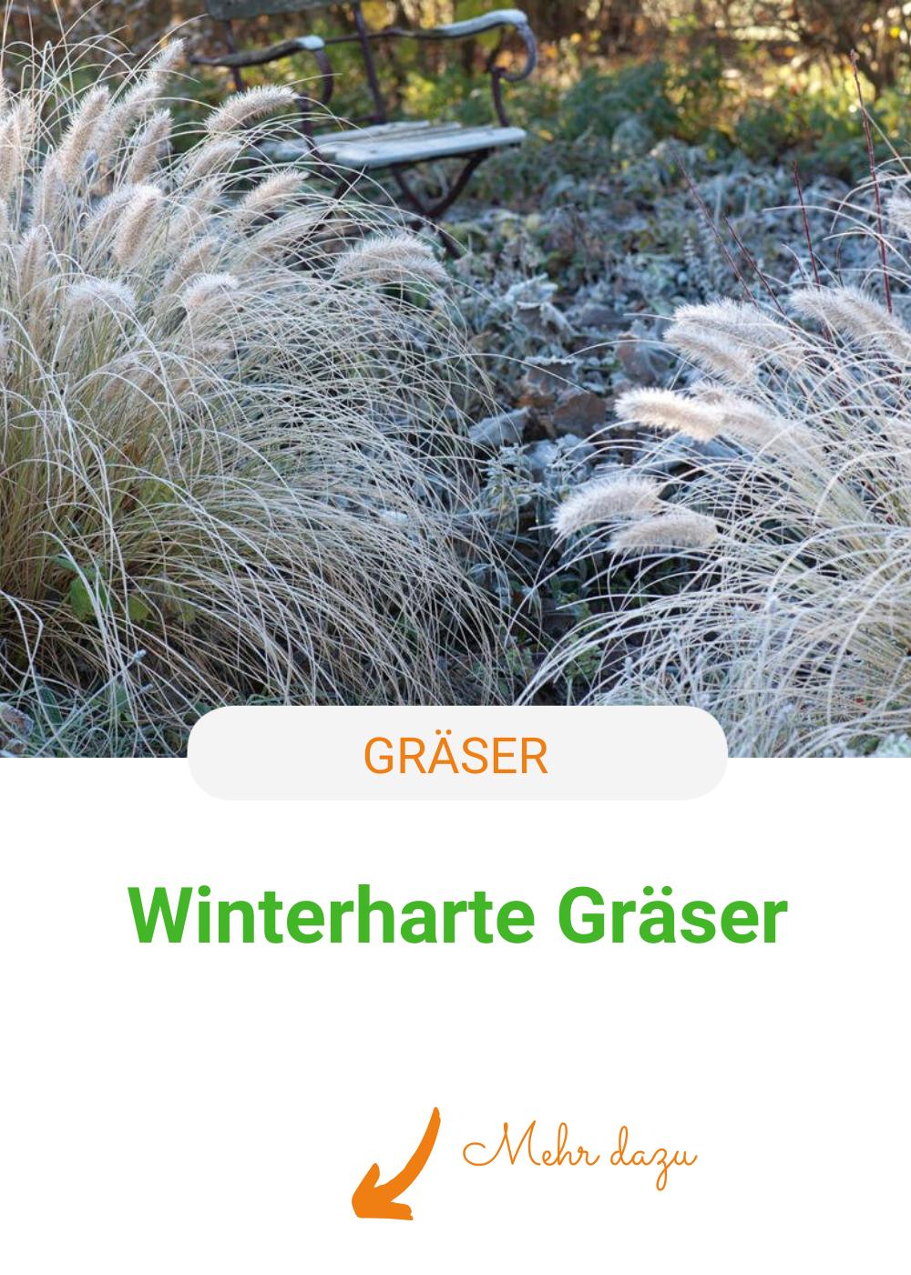 Winterharte Graser Die Besten Arten In 2020 Winterharte Graser Winterhart Ziergras Winterhart