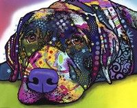 Savvy Labrador Fine-Art Print