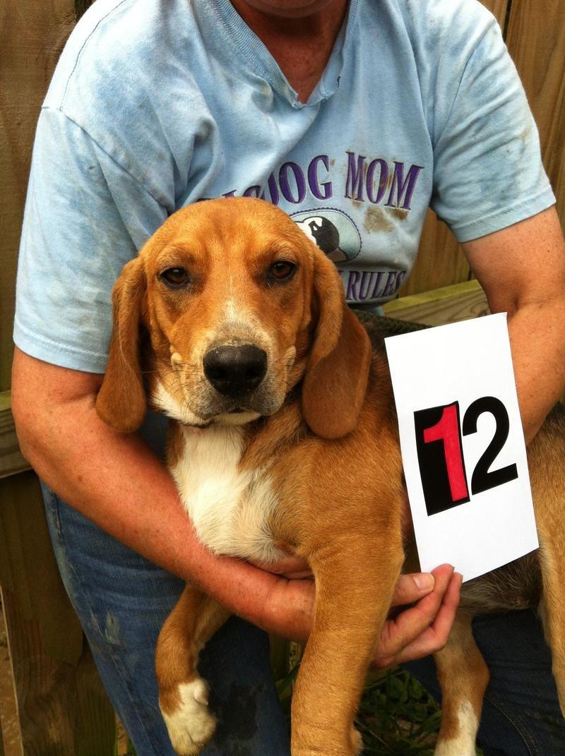 Adopt Millie on Adoption, Dog bed, Beagle