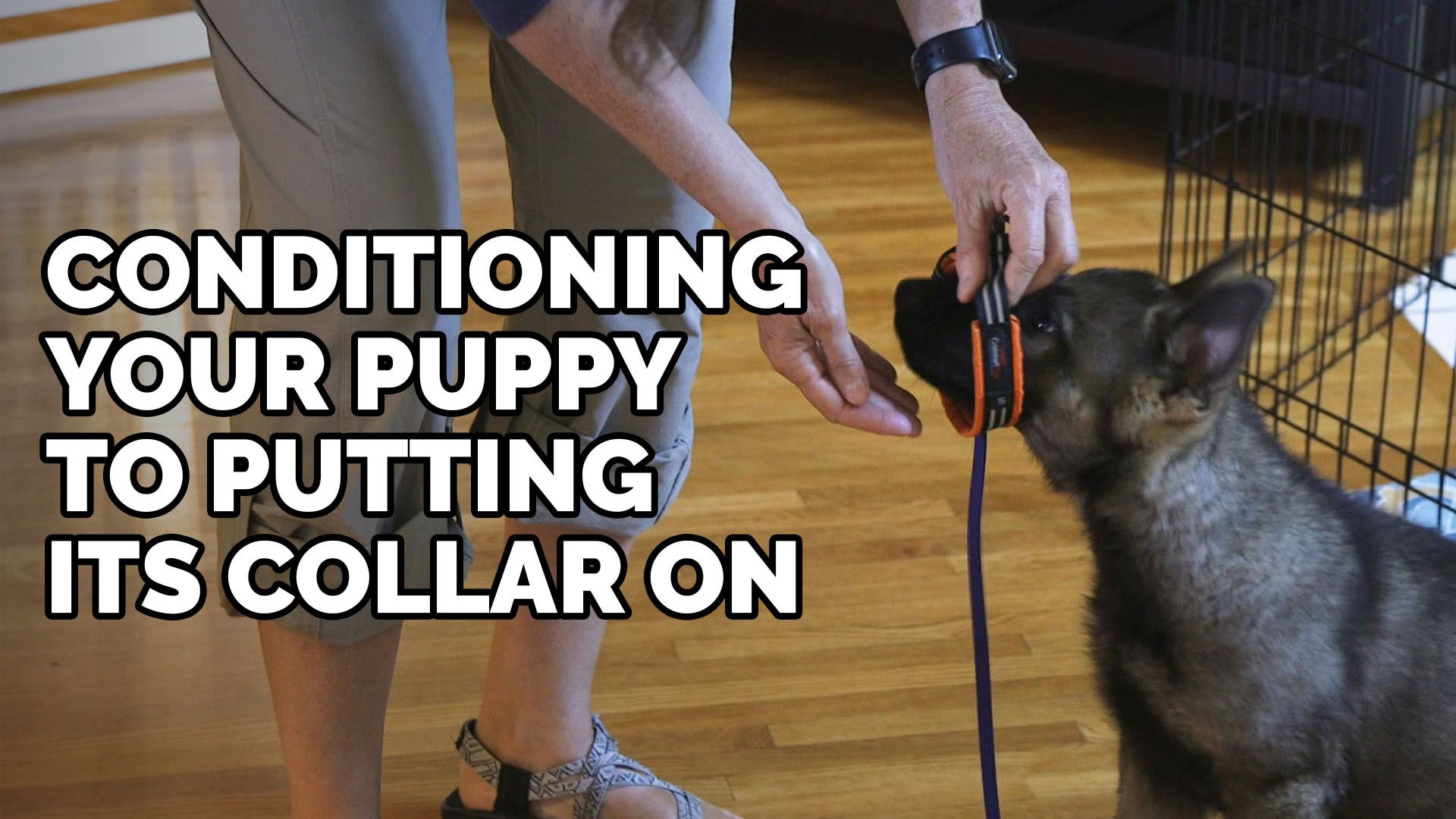 In this video, we demonstrate how to teach your puppy to