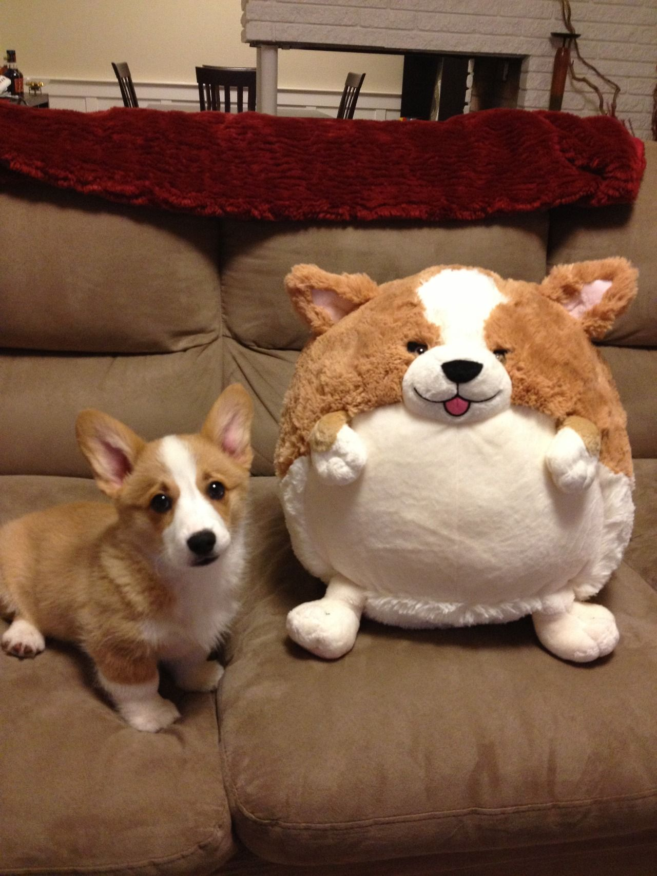 I have got to get my hands on this stuffed round fat plush Corgi....so cute my head just exploded