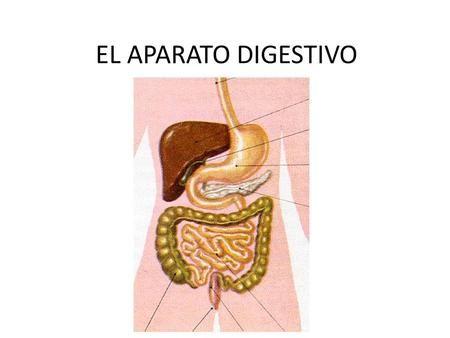 La Presentación Yesenia Angarita Pimiento Licenciatura V Semestre 2014 Partes Del Aparato Digestivo Aparato Digestivo Intestinos