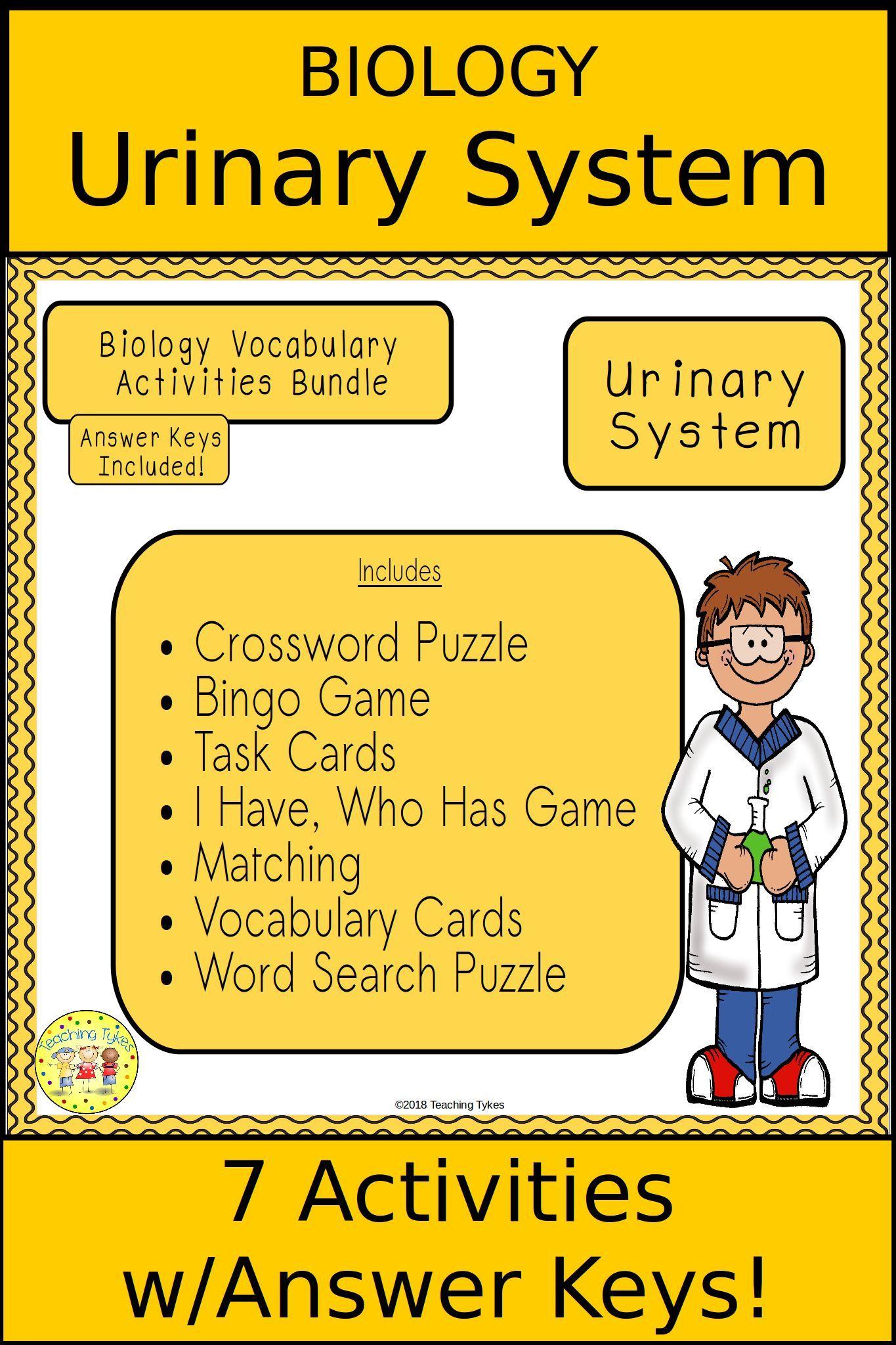 Urinary System Biology Bundle