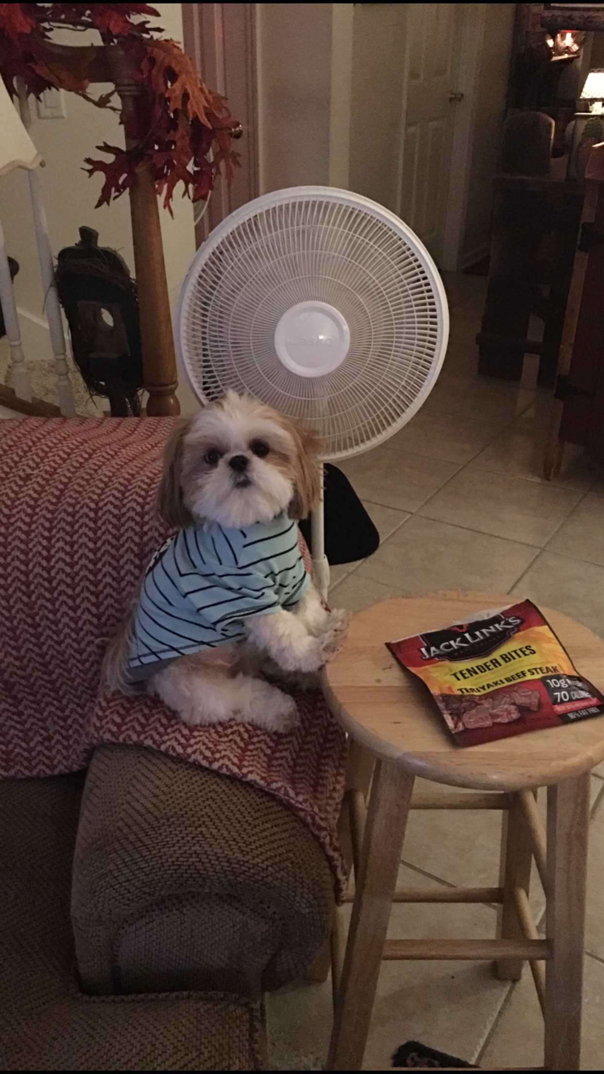 Pin by tammy harris on animals pinterest shih tzu cute dogs and
