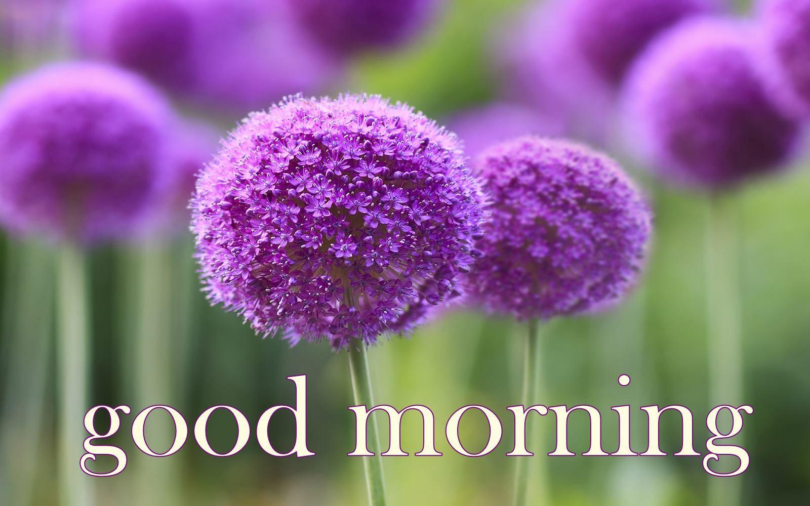 Good Morning Purple Flowers HD Wallpaper #01021 | good ...