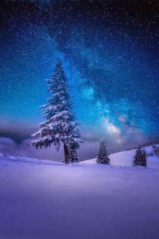 WinterStar By Wolfgang Moritzer | https://500px.com/photo/93246047/