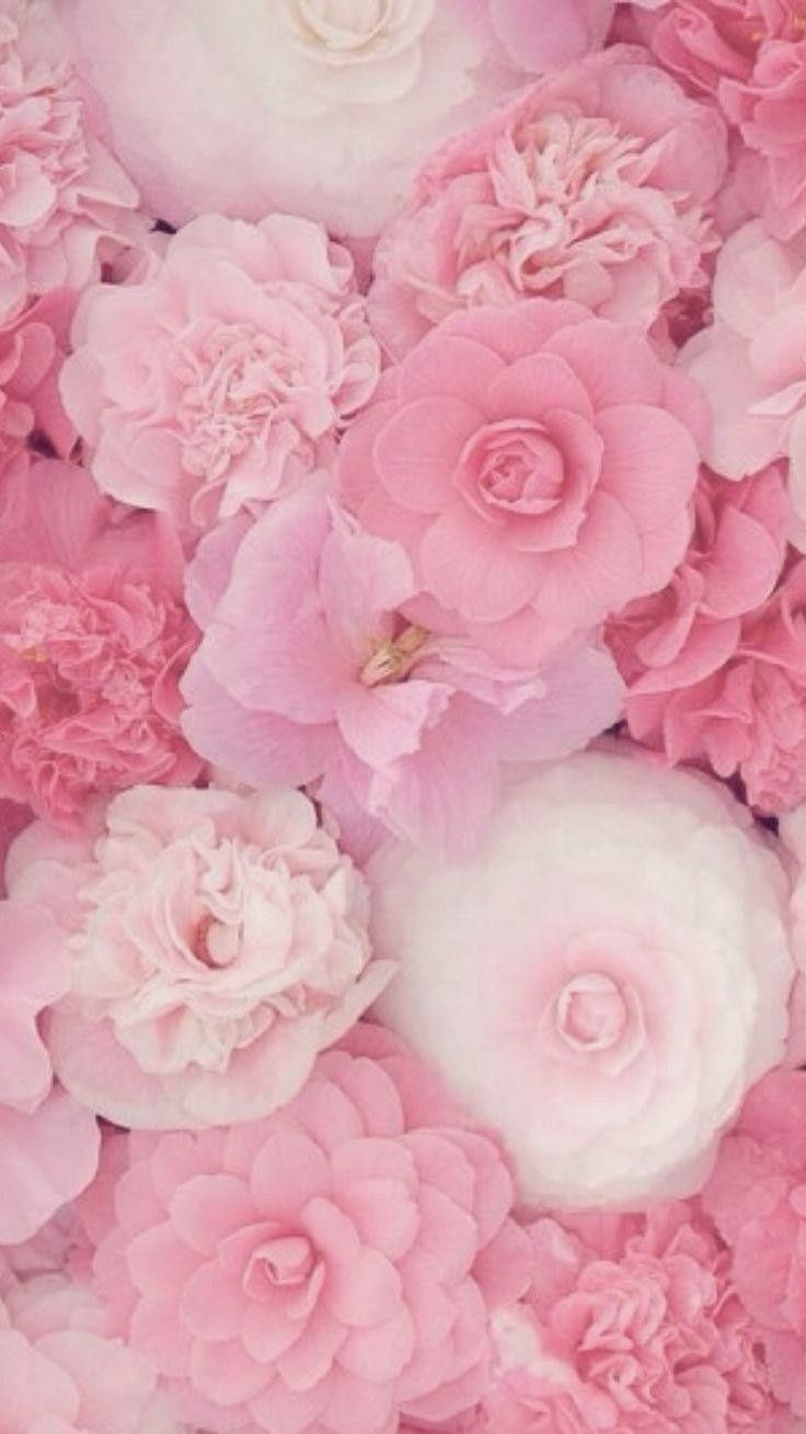 Pin by GracieGirl on Floral | Flowers, Flower wallpaper ...