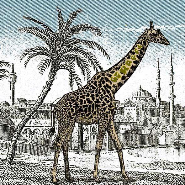 Hidden Giraffe Solution Optical Illusions Pinterest Giraffe - griffe für küche