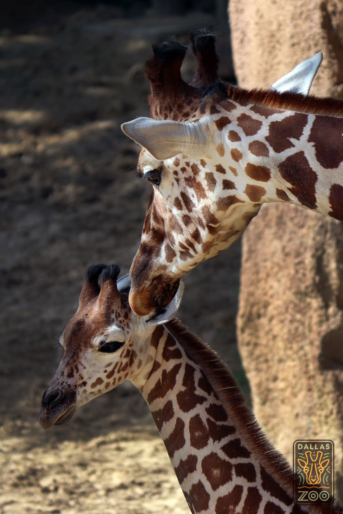 Kipenzi meets her older sister Jamie. The two gals get along beautifully.