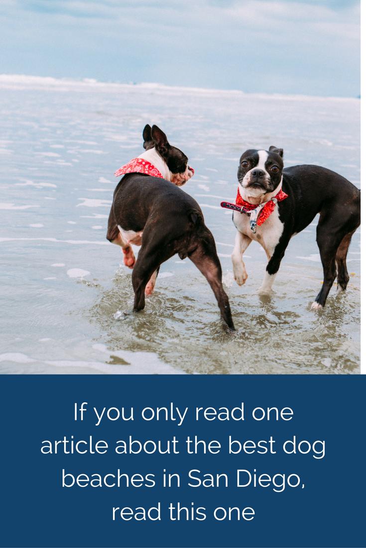 Best Dog Beaches In San Diego Dog Beach San Diego Beach Boston Terrier Love