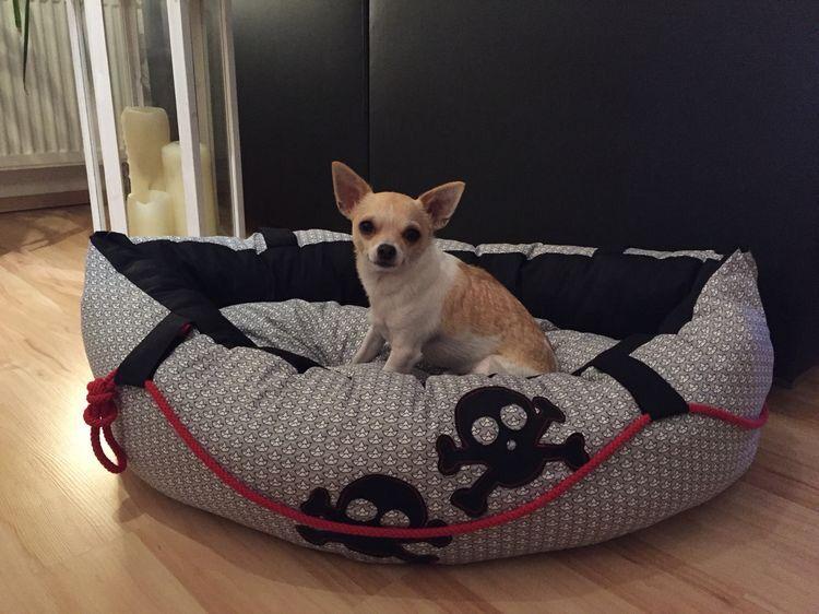 hundebett boot n hen pinterest hundebett boote und hunde. Black Bedroom Furniture Sets. Home Design Ideas
