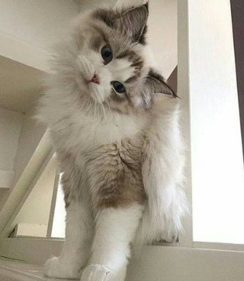Pin By Niaina Melissa On Mouchou Cute Cats Cute Cats And Kittens Cats And Kittens