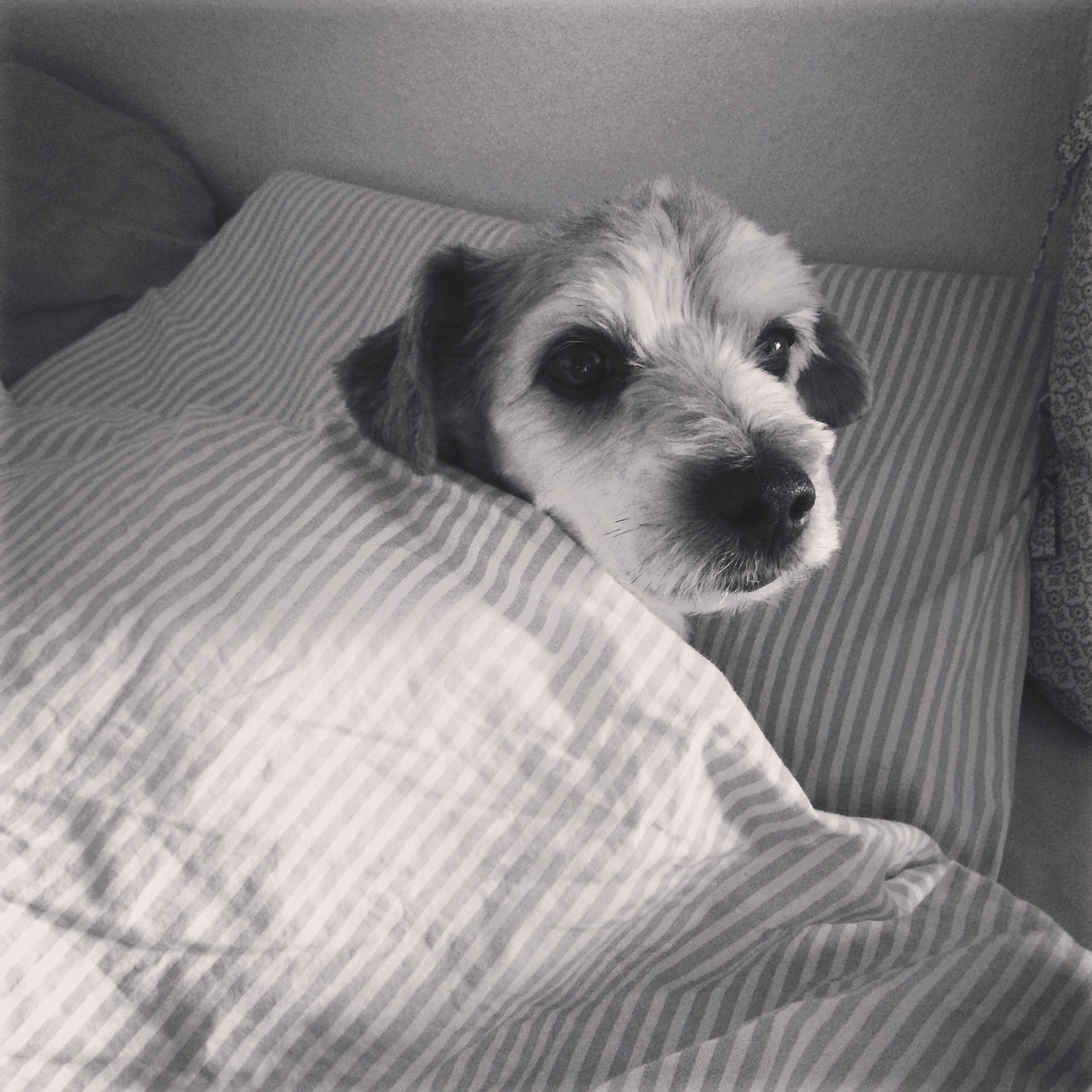 My little bed thief...