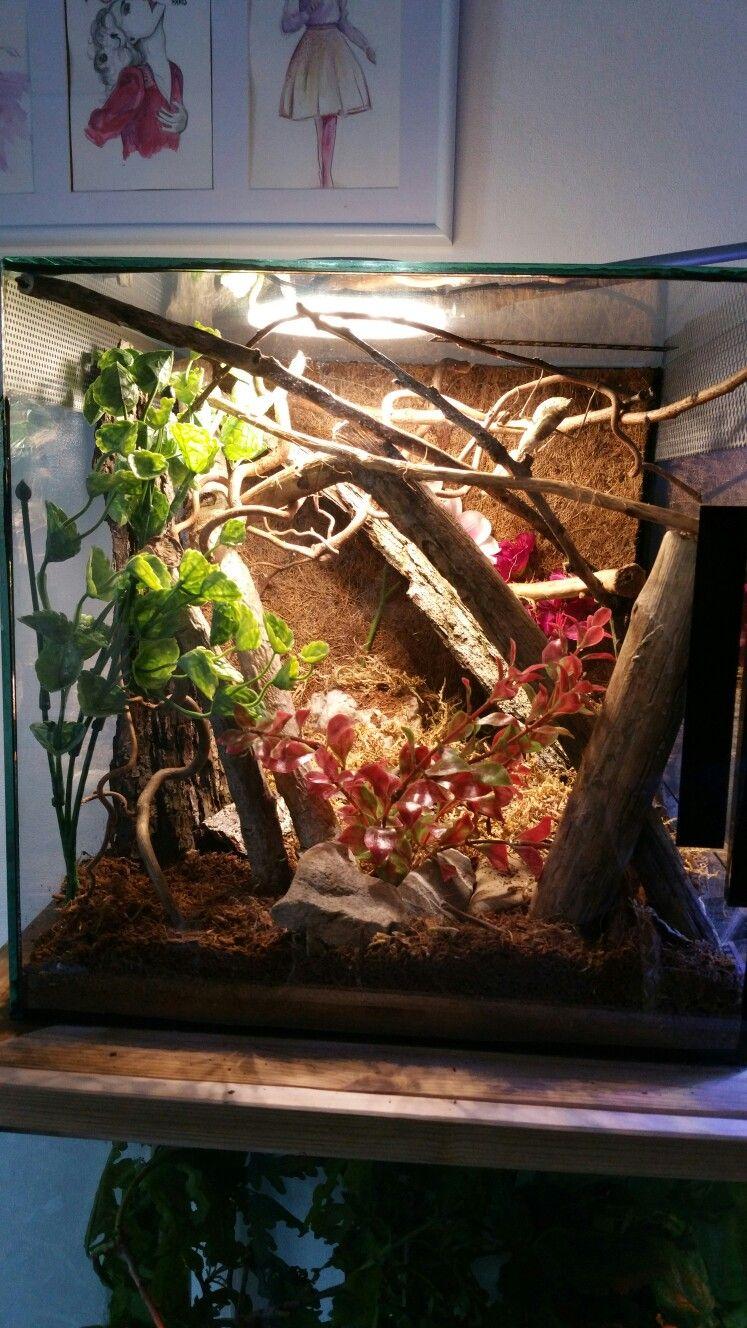 Praying Mantis Parasphendale Enclosure Enclosure For A Budwing Mantis Praying Mantis Pray Terrarium