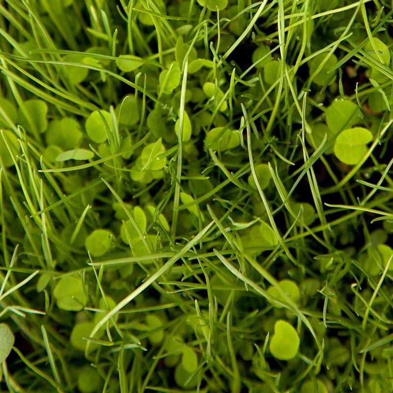 """Grow your own rabbit food! Great website for all sorts of pasture grasses. This particular mix """"herbal pasture mix"""" is a perfect mix for bunnies, containing timothy, orchard grass, alfalfa, multiple types fo clover, and lots of other rabbit favorites. At $6/lb, you can grow enough food to last your bunny forever. I plan on planting this in the entire area where the rabbit hutch, and run will be located, as well as planting specific herbs (cilantro, basil, etc.) in pots to rotate in with her."""