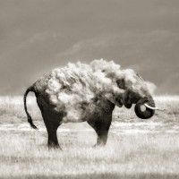 1x.com is the world's biggest curated photo gallery online. Each photo is selected by professional curators. An Elephant in Sheep's Clothing by Marina Cano