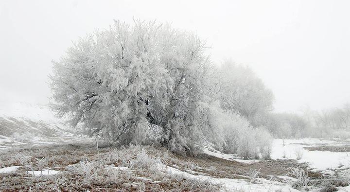 Frost #Montana #MontanaMoment