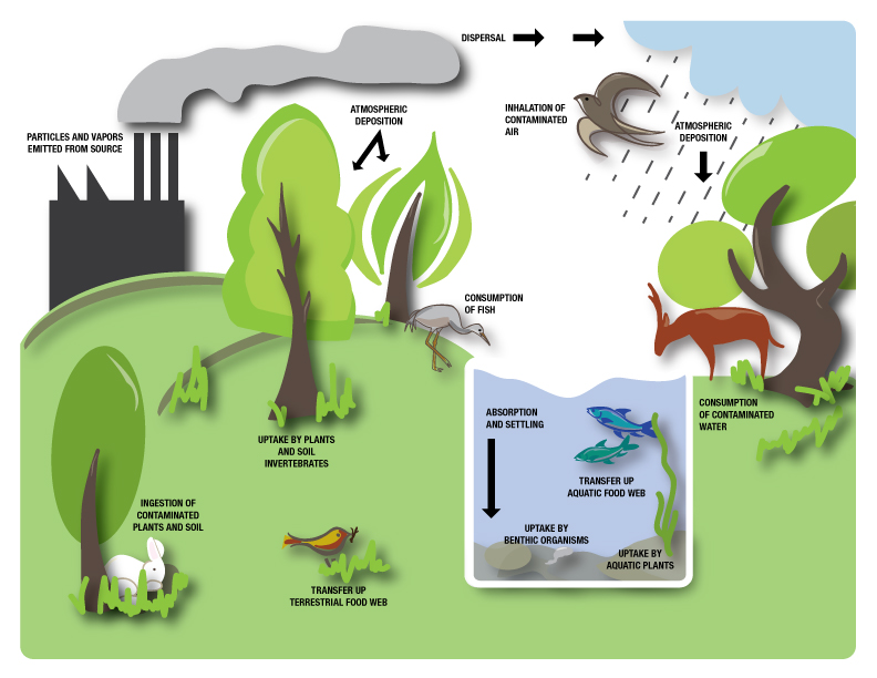diagram showing movement of air pollutants in environment Pollution On Animals 5f22c66a664fae33b38fc5def8ca0c1b