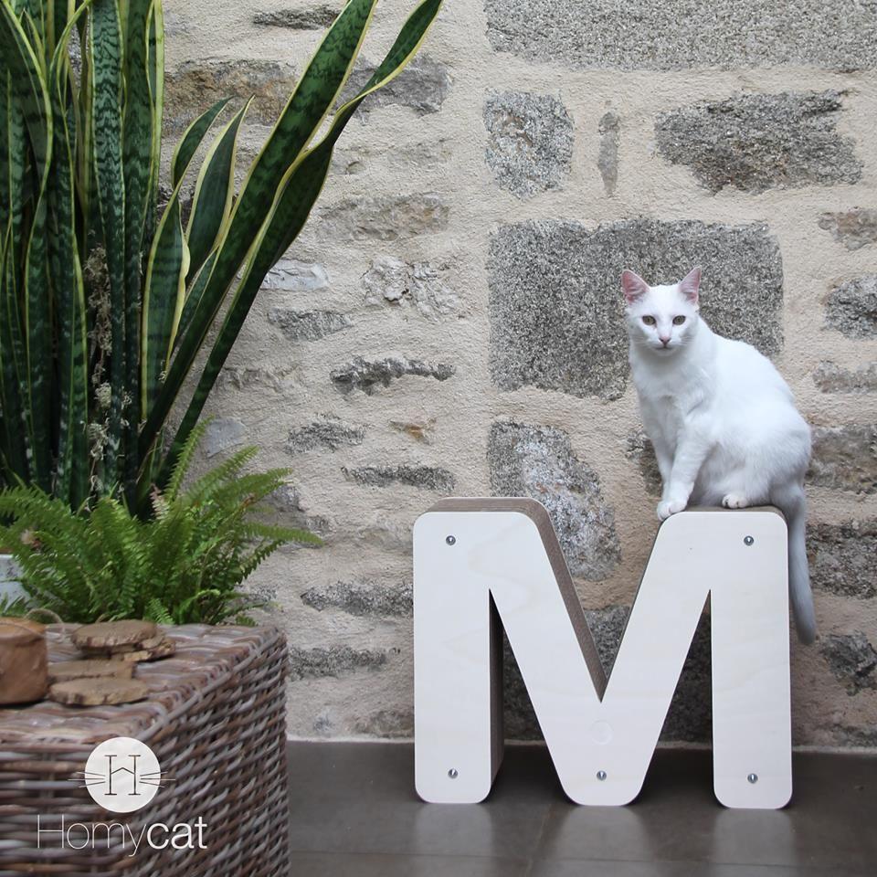 M erveilleux ! La lettre HOMYCAT et le chat ne font qu'un avec la déco très nature