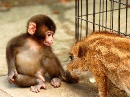 ウリ坊 小猿ちゃ ん 猿 かわいい ウリ坊 哺乳類