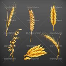 """Résultat de recherche d'images pour """"épis de blé vectoriel"""""""
