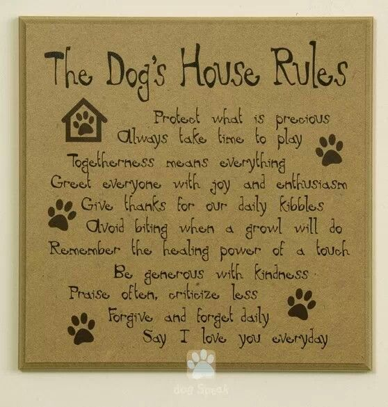 A Dog S House Rules That Humans Should Take Note Of Dog House