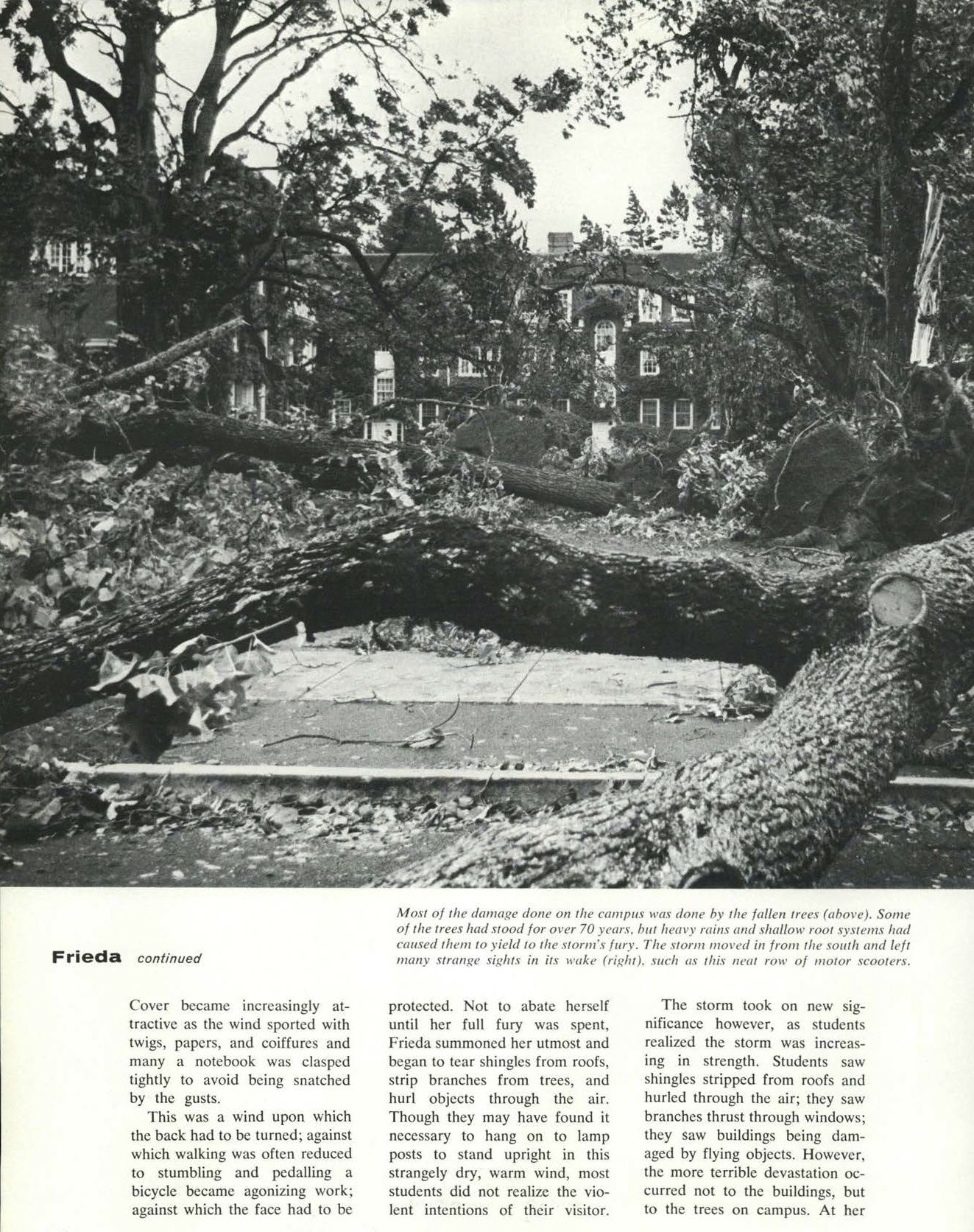 Pt 2 Of Recap Of 1962 Columbus Day Storm Typhoon Frieda Destroyed Most Of The Trees On Campus Damaged Buildings University Of Oregon Oregon Evergreen State