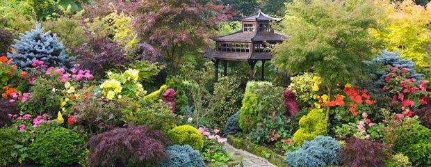 Plantes pour jardins japonais actualit s sur le jardin - Plantes pour jardin japonais ...