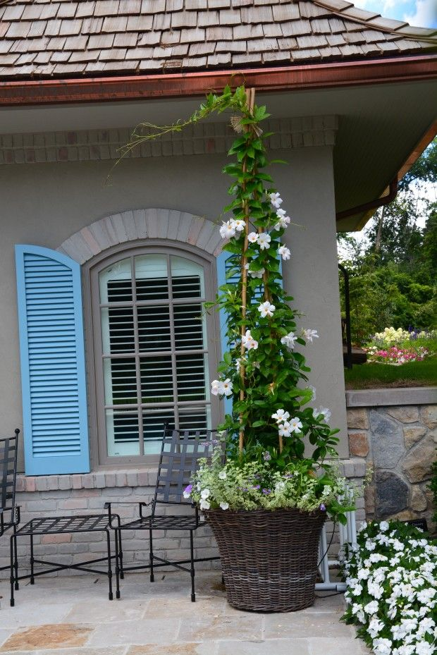 Love the blue shutters, outdoor dining and climbing vine in planter ...