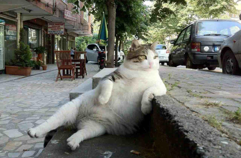 Картинки по запросу стамбульские кошки