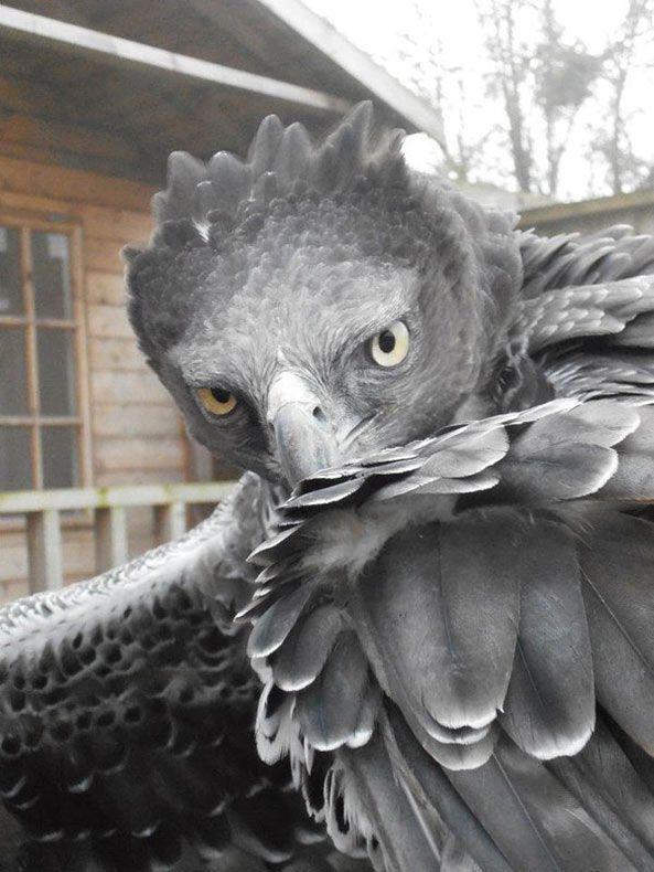 Entrenadora de animales comparte sus asombrosas imágenes con aves de presa - POP-PICTURE