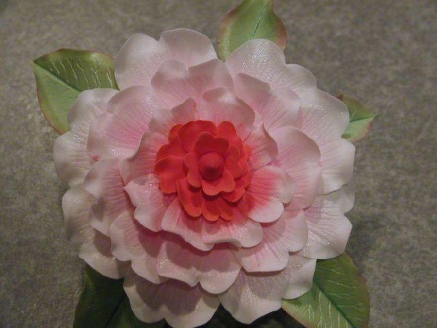 Gumpaste Camellia Gum Paste Camellia Flowers