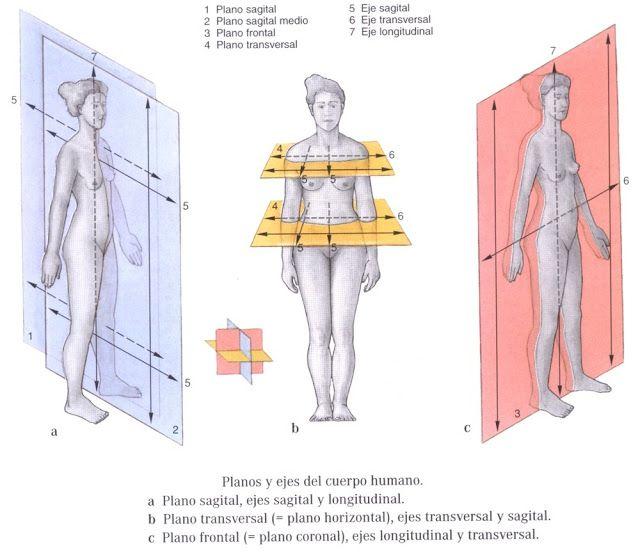 Fisiologia: Regiones Corporales y Posicion Anatomica | escuela ...