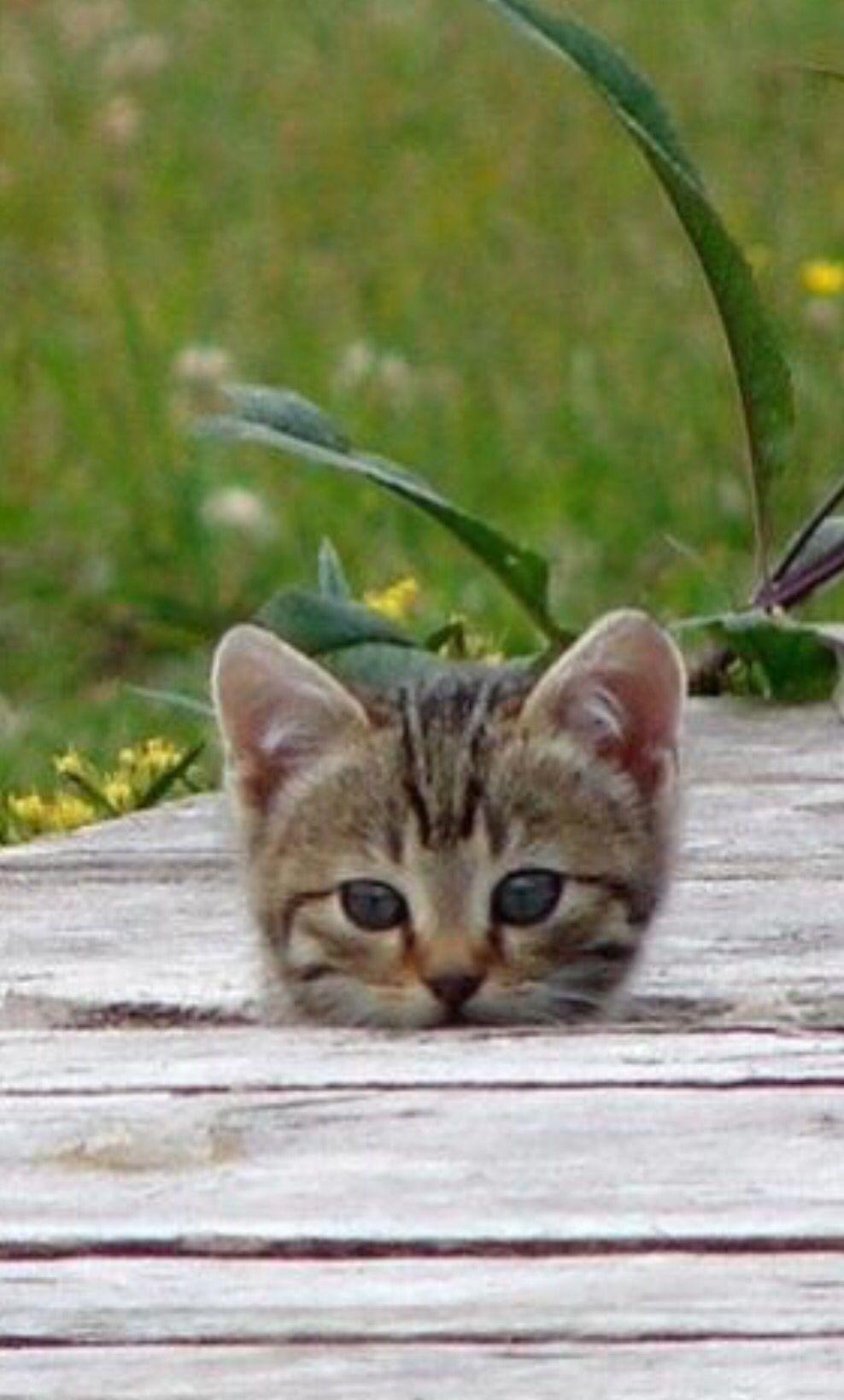 Peek A Boo Cute Cats Cute Animals Kittens Cutest