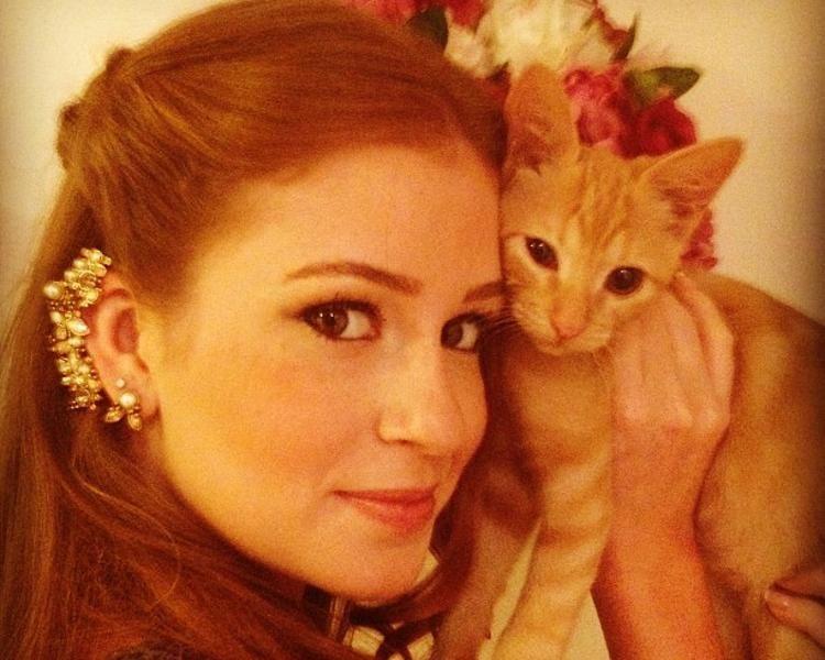 celebridades e seus gato - Pesquisa Google