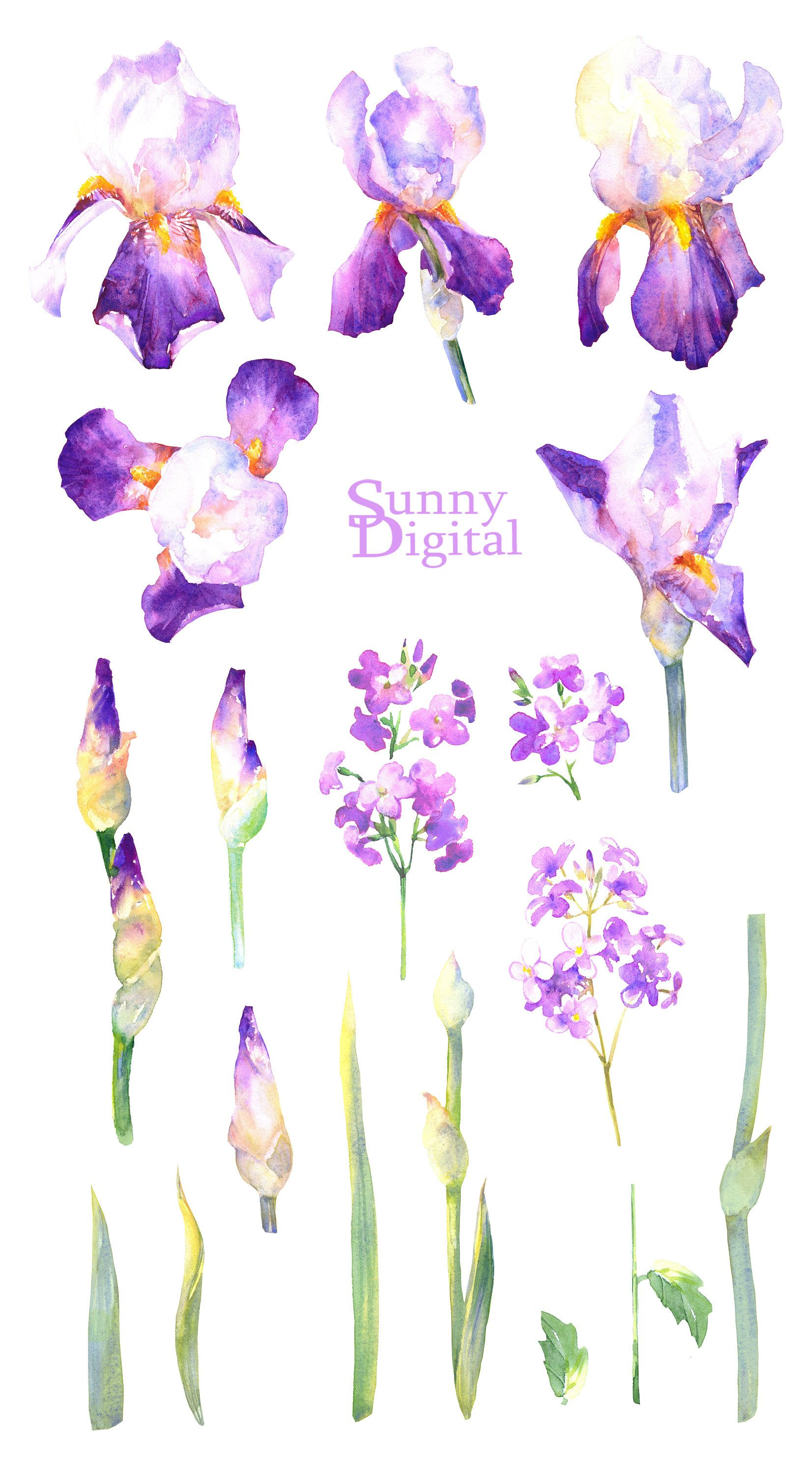 Purple Iris Watercolor Clipart Handpainted Floral Element Etsy Watercolor Clipart Purple Iris Flower Drawing