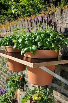 Tomaten Kopfuber Anpflanzen Garten Garten Garten Pflanzen Und