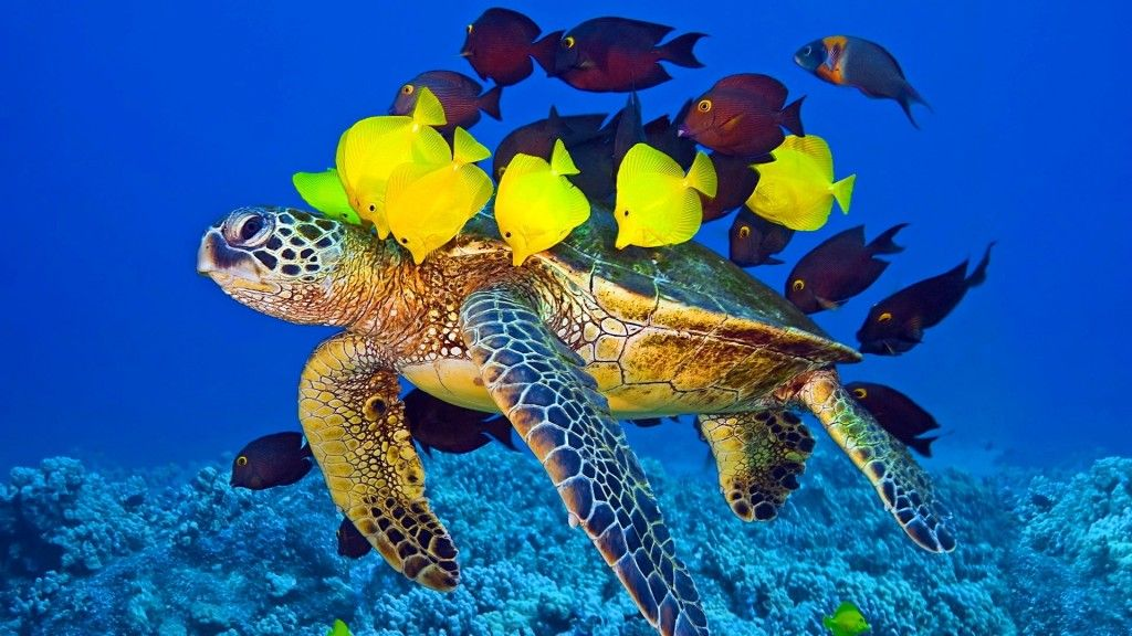 Turtle And Fish Underwater Fish Hd Wallpapers Turtle And Fish Underwater Turtle Wallpaper Animals Wild Fish Wallpaper