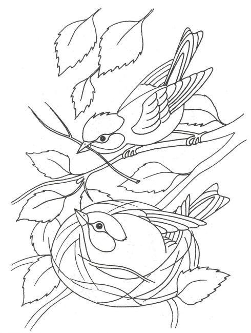 Раскраска. Птицы весной | Раскраски, Рисунки в ярких тонах ...